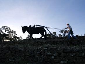 La mule et son muletier