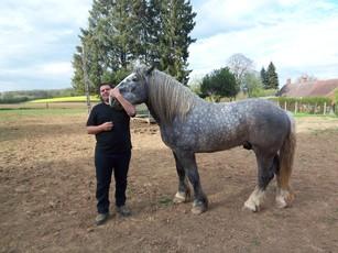 Le cheval de trait et son propriétaire